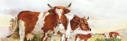 Kuh gemalt